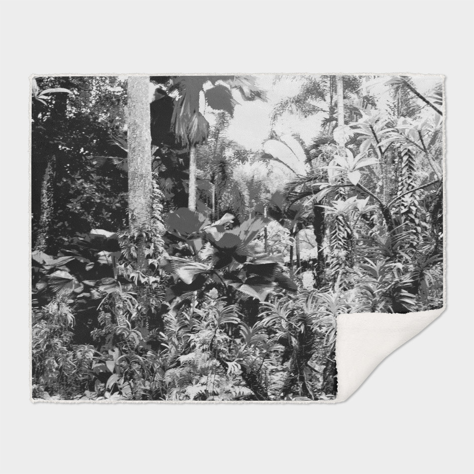 Singapore Botanical Garden 1 - Black & White