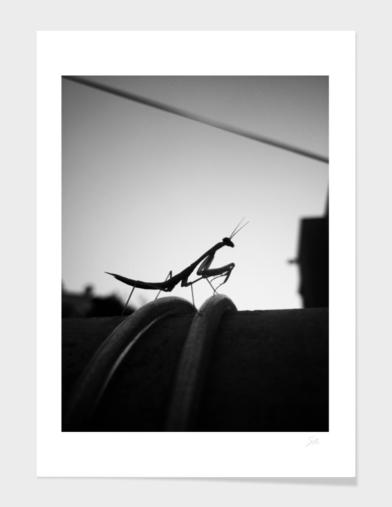 Shadow Of The Mantis