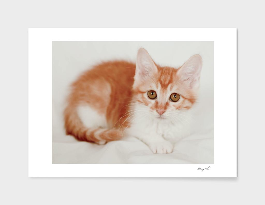 Kitty cat-1