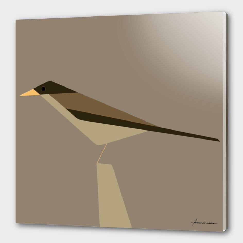 Zorzal | Austral thrush
