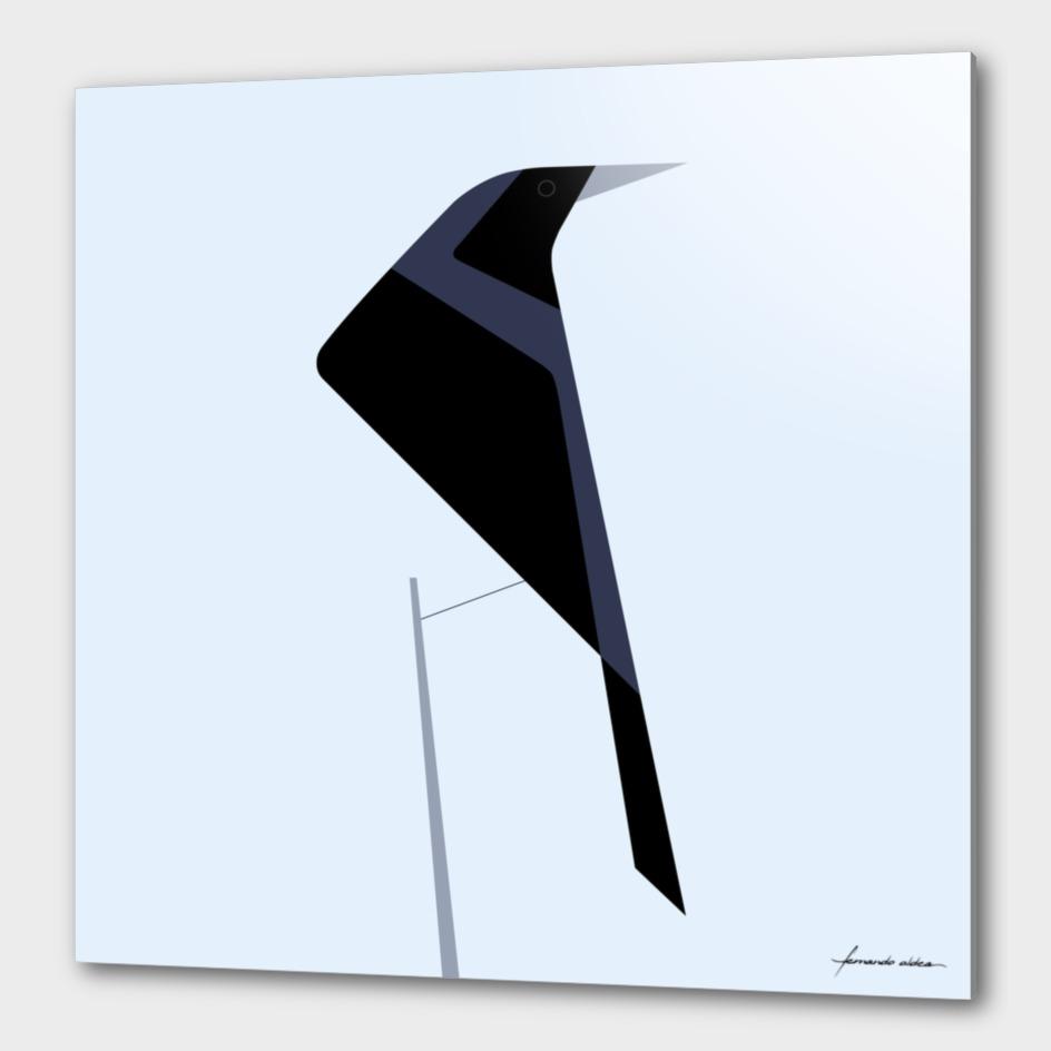 Tordo / Austral blackbird