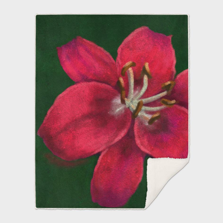 Phyllis's Lily PA170712a-15