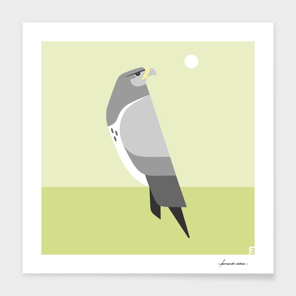 Águila chilena / Black-chested buzzard-eagle