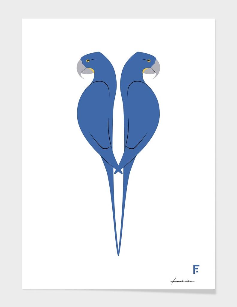 Guacamayo jacinto | Hyacinth macaw