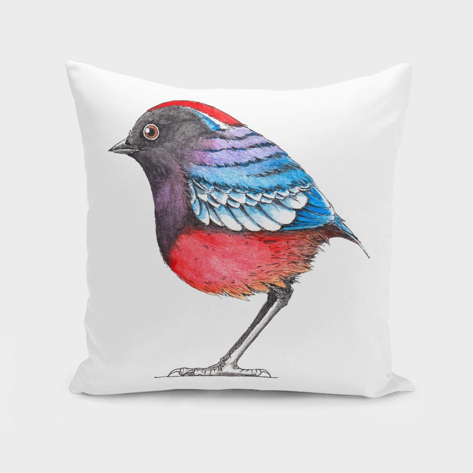 Bird: Garnet Pitta