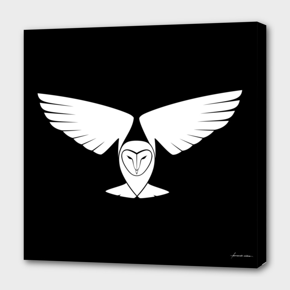 Lechuza común / Barn owl