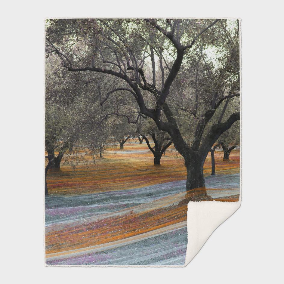 Fishing Olives - autuno