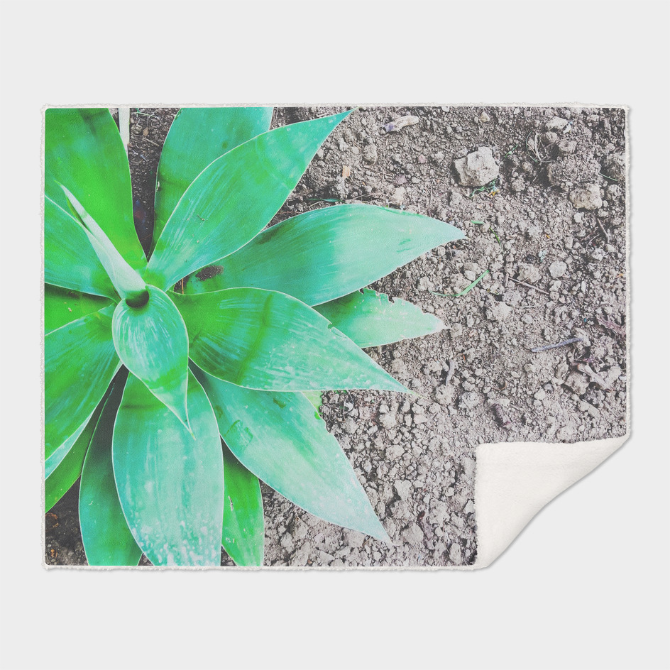 green leaf plant with sand background