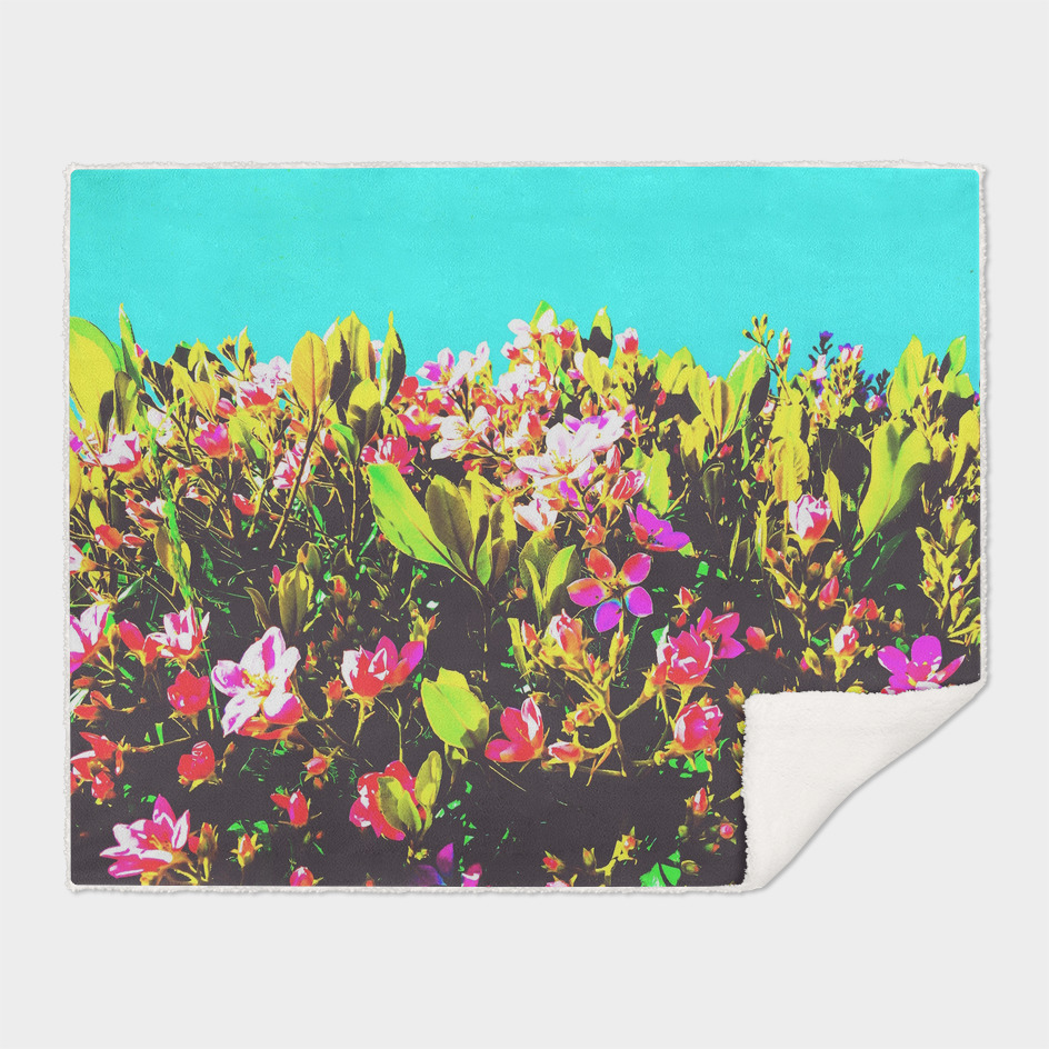 pink flowers with green leaves and blue background