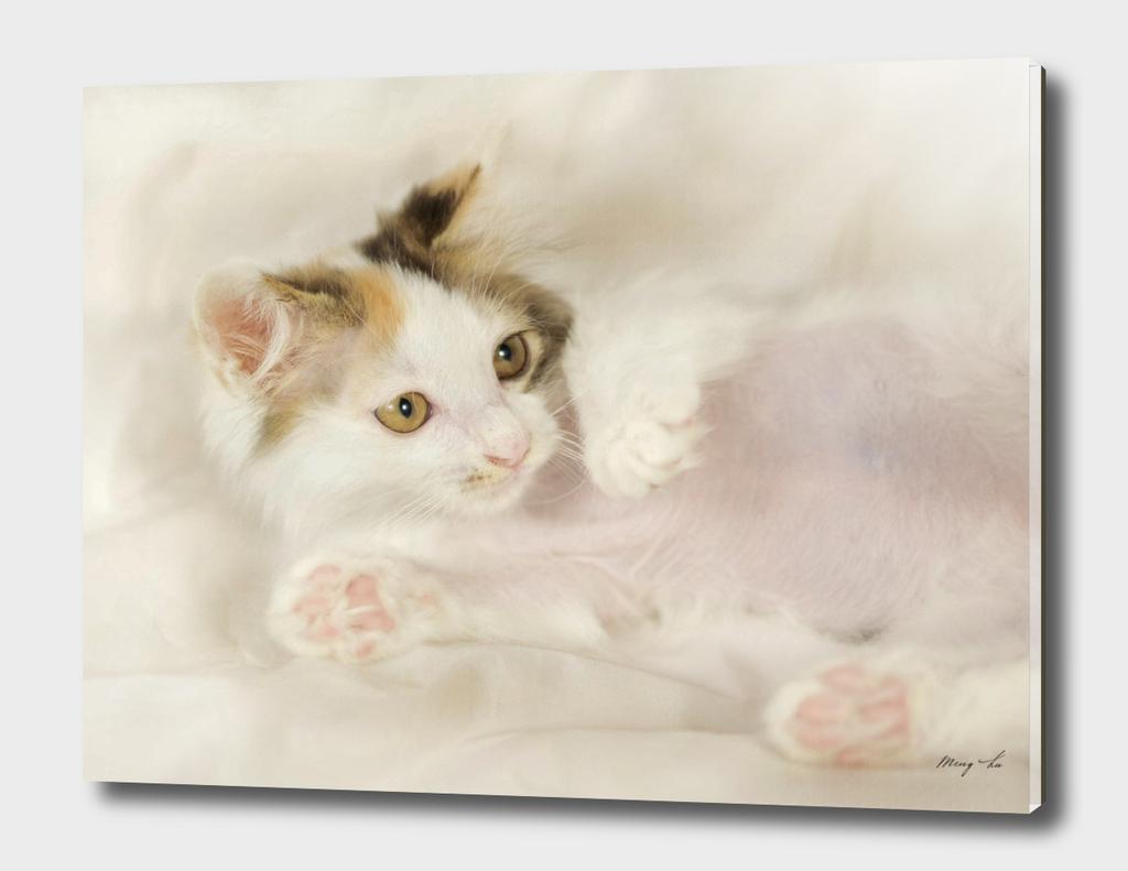 lying kitty-2