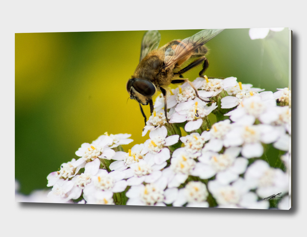 Bee working hard