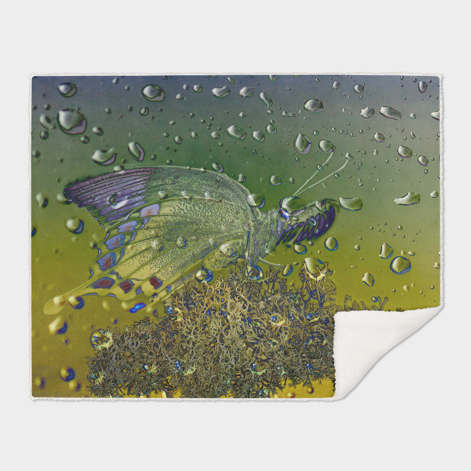 Raindrops-Sulawesi Peacock Butterfly