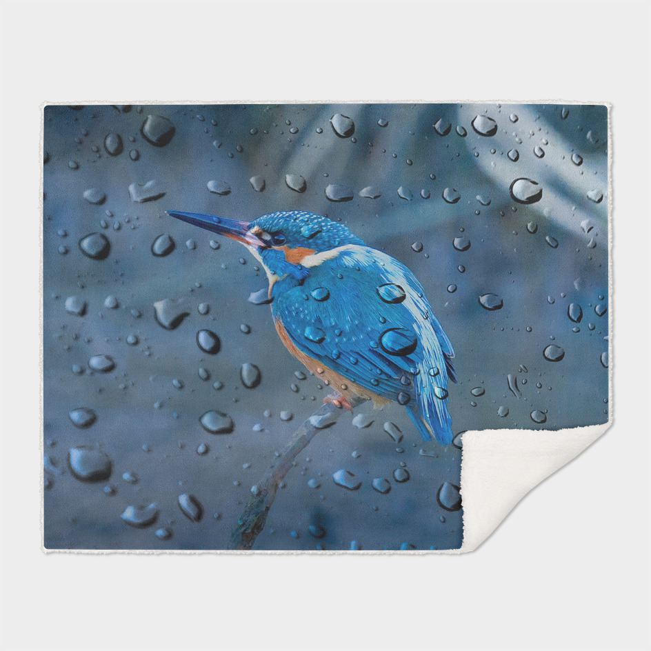 Kingfisher Reflections of a Spring Shower.