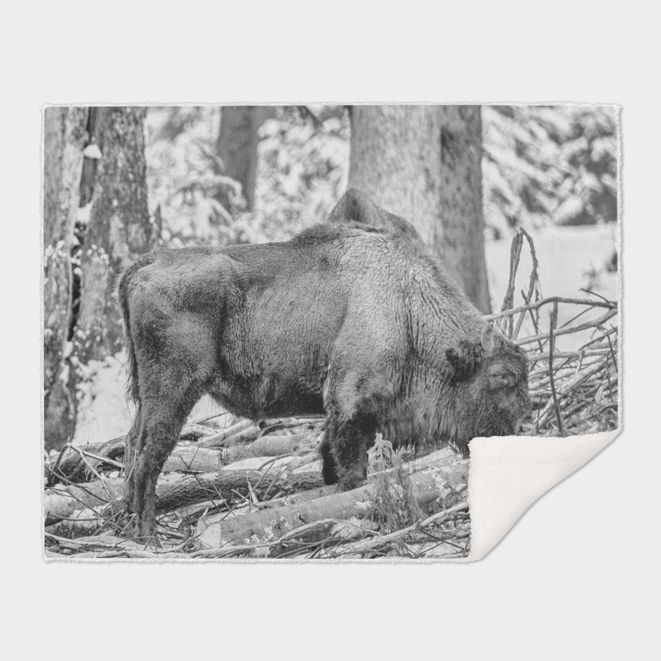 Eurasian Bison (Black & White Edition)