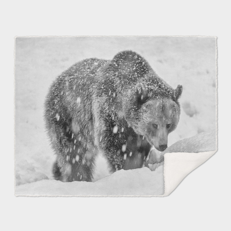 Eurasian Brown Bear (Black & White Edition)