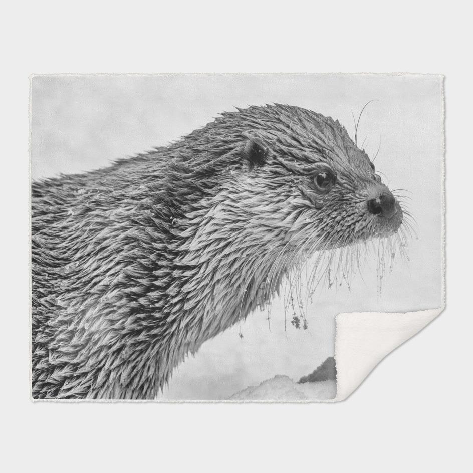 Eurasian Otter ( Black & White Edition)