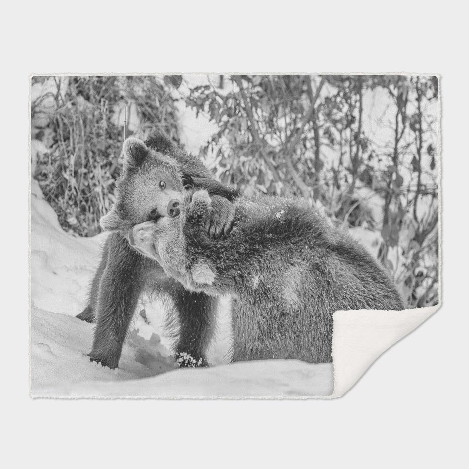 Eurasian Brown Bear Cubs (Black & White Edition)