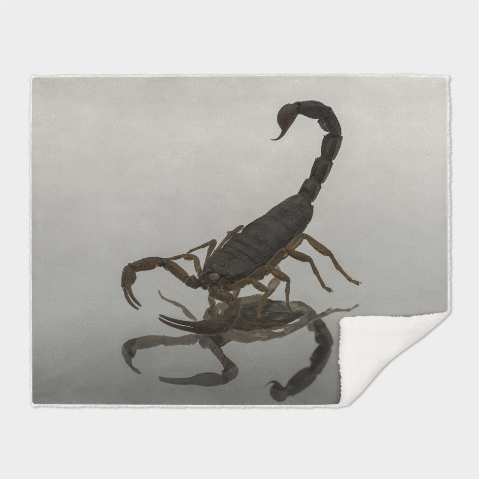 Mexican Scorpion on Glass
