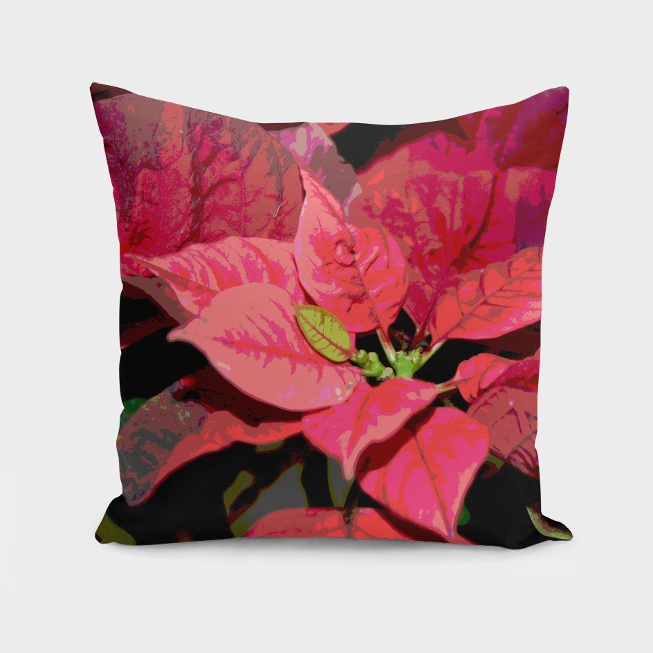 Poinsettia DPGPA170905e-16