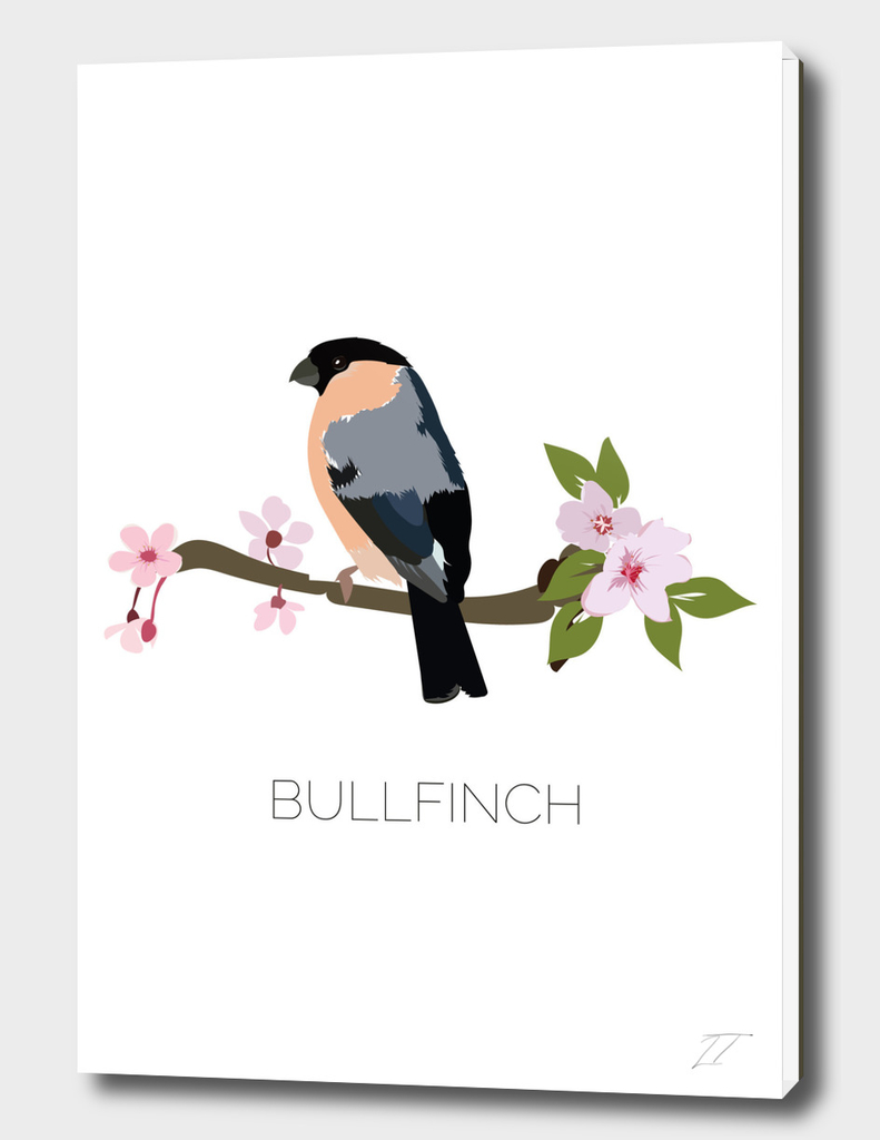 Bullfinch Art Print