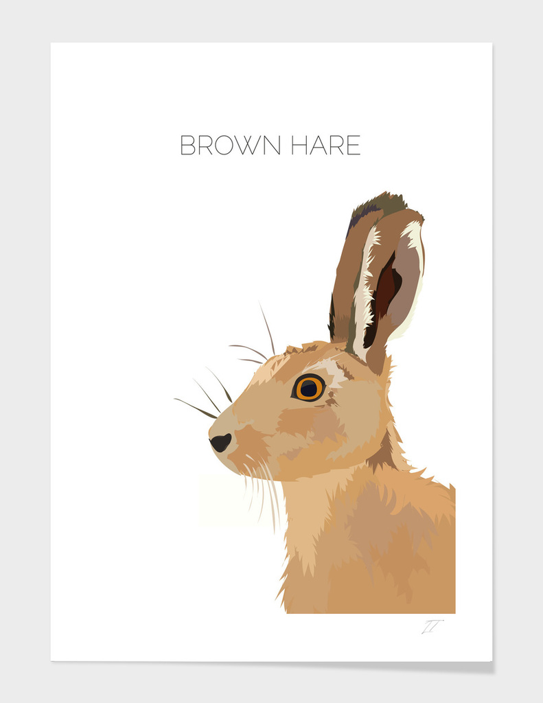 Brown Hare Illustration Art Print