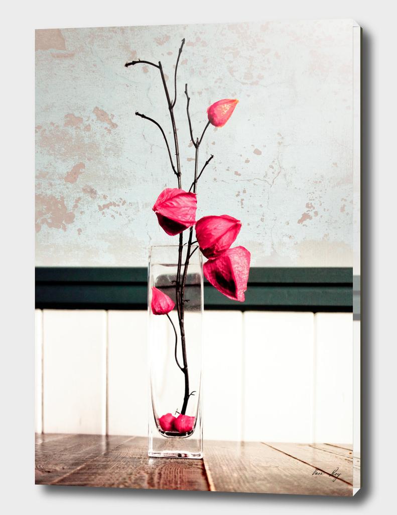 Elegance 03 (Chinese Lantern)