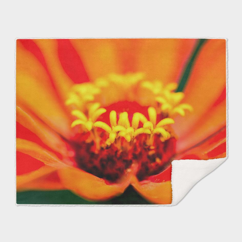 Zinnia Flower - The Secret Garden
