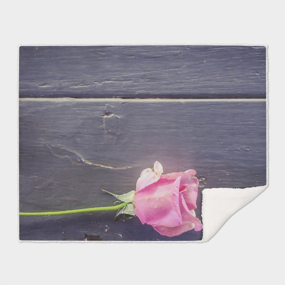 pink rose with wood background