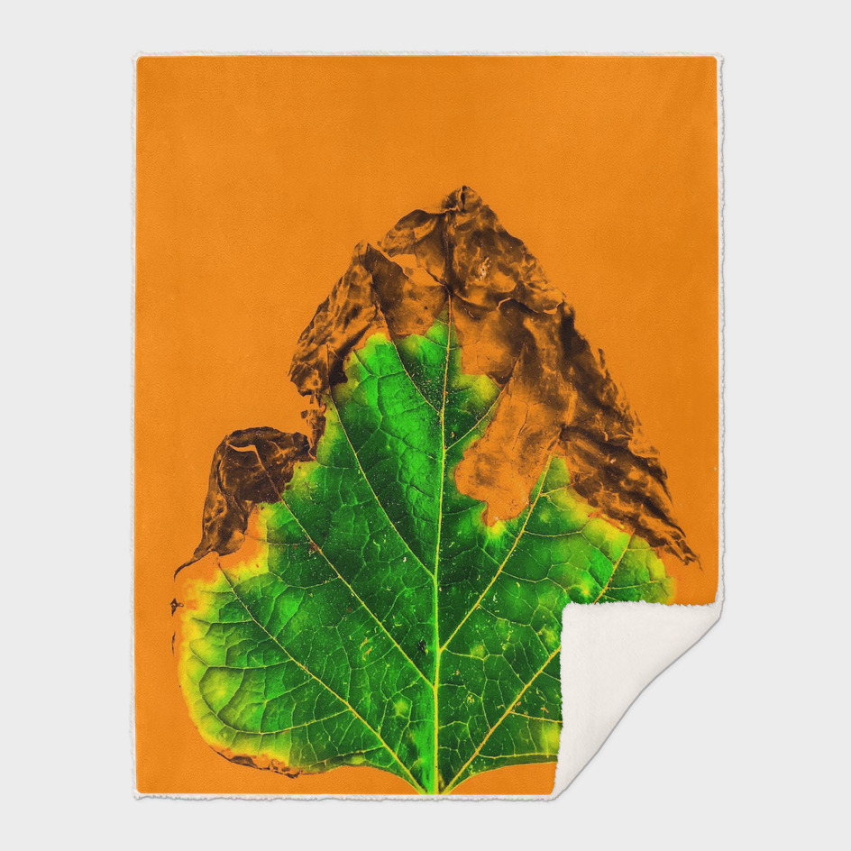 burning green leaf texture with orange background