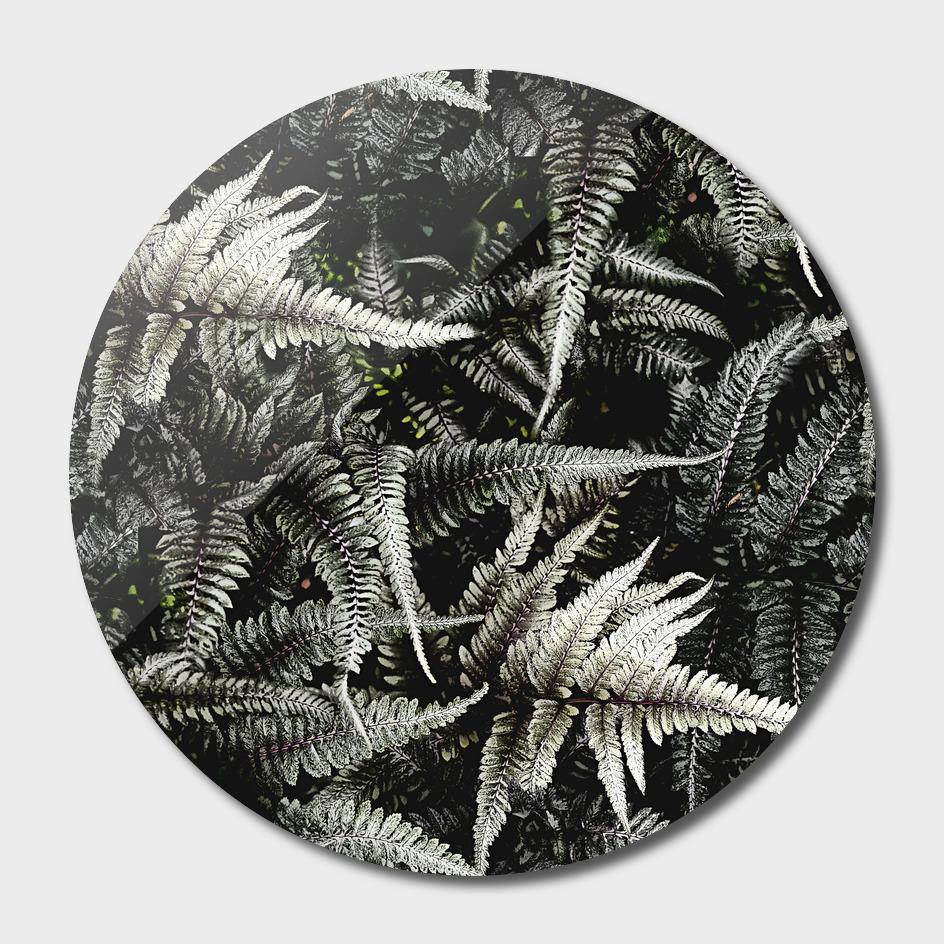 Ferns - A Pattern