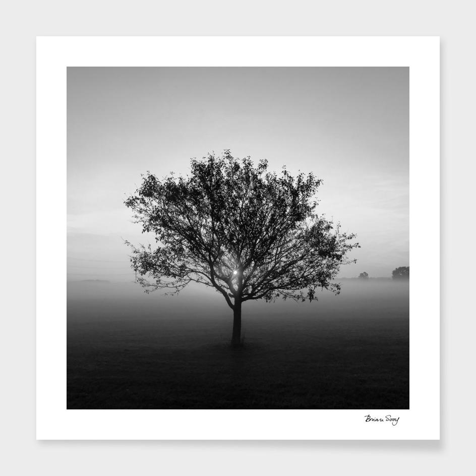 Tree at Sunrise, Black and White