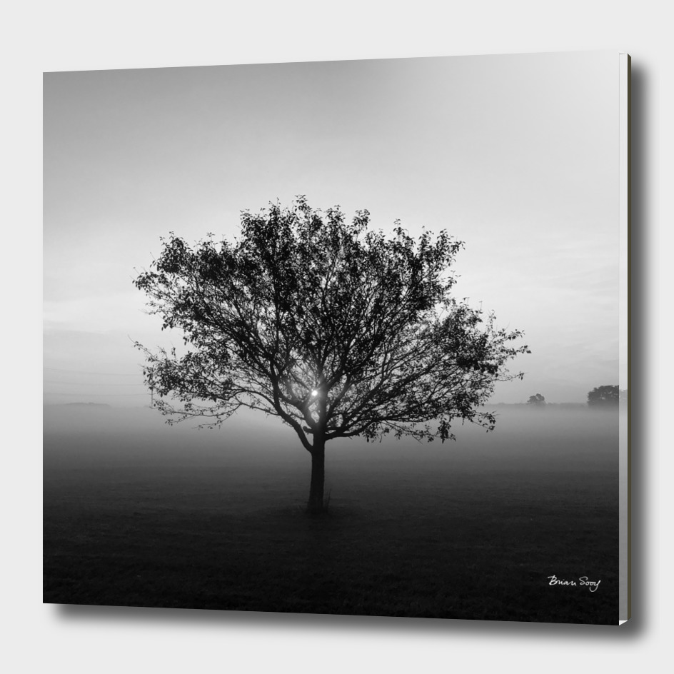 Tree at Sunrise, Black and White