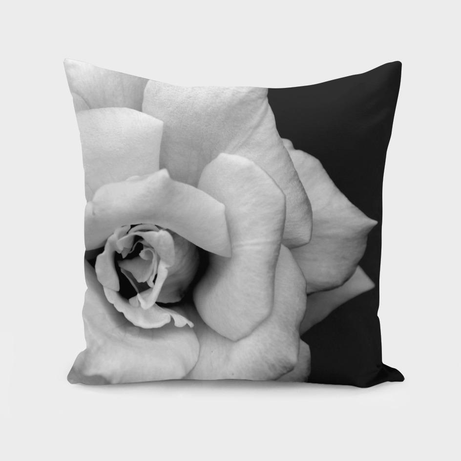Monochrome rose