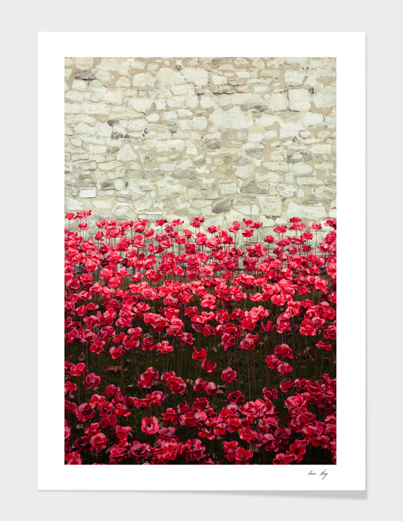 Tower Poppies 04A