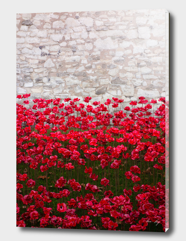 Tower Poppies 04B