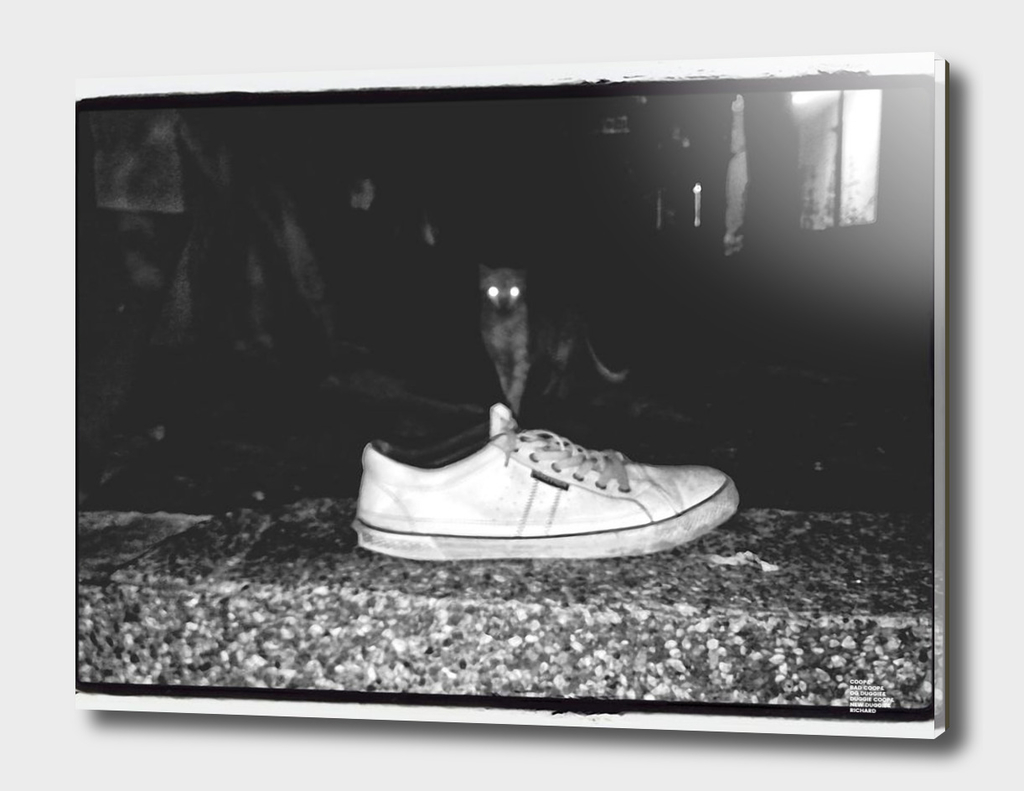 0__0000_street-photography-shoes-streetphoto_bw-cat-b
