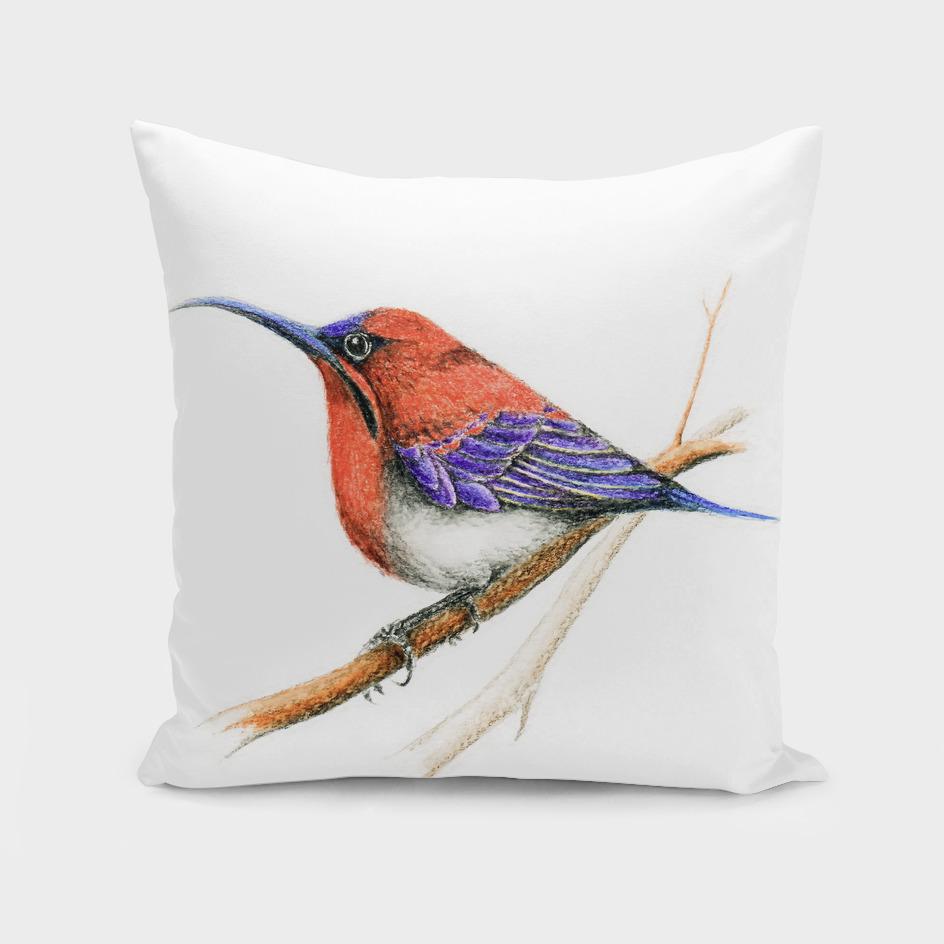 Bird: Sunbird