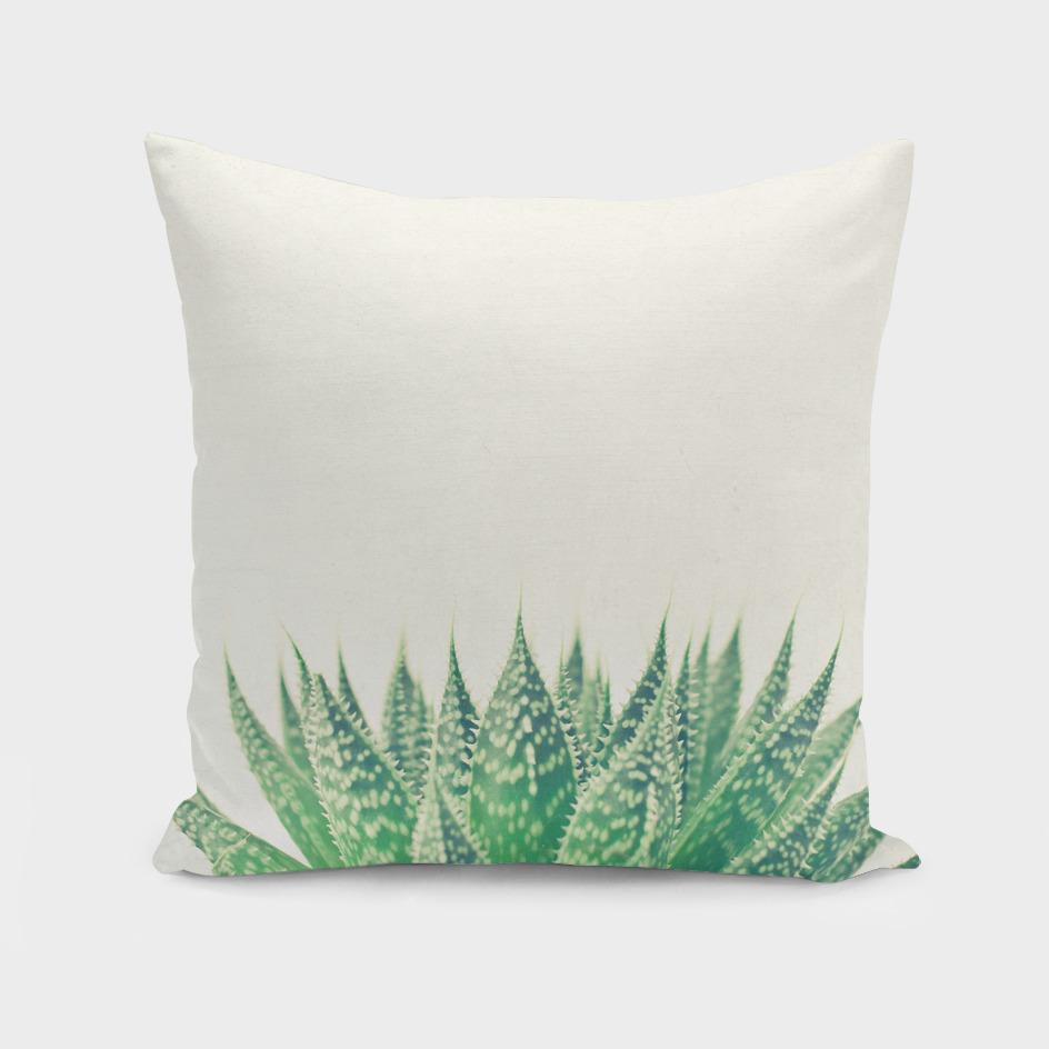Lace Aloe