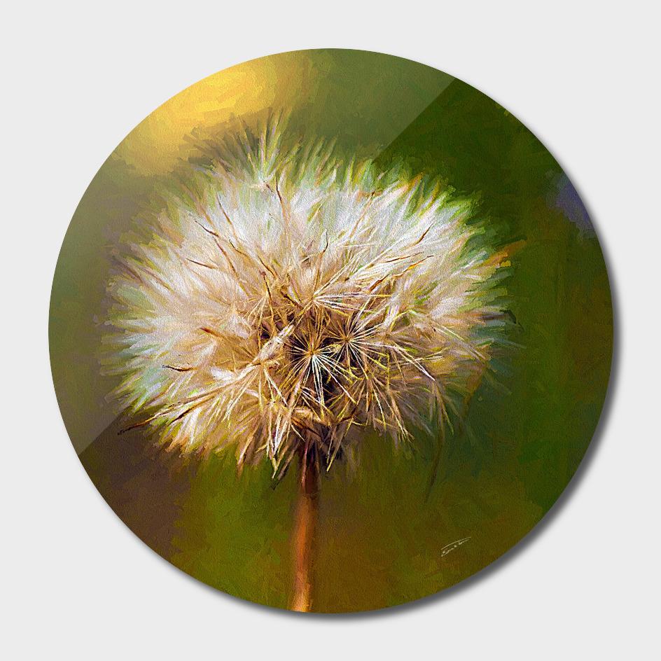 Fall Dandelion