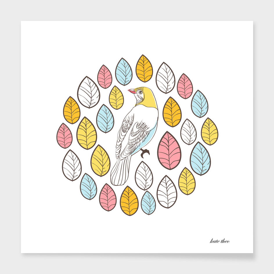 colorful petali