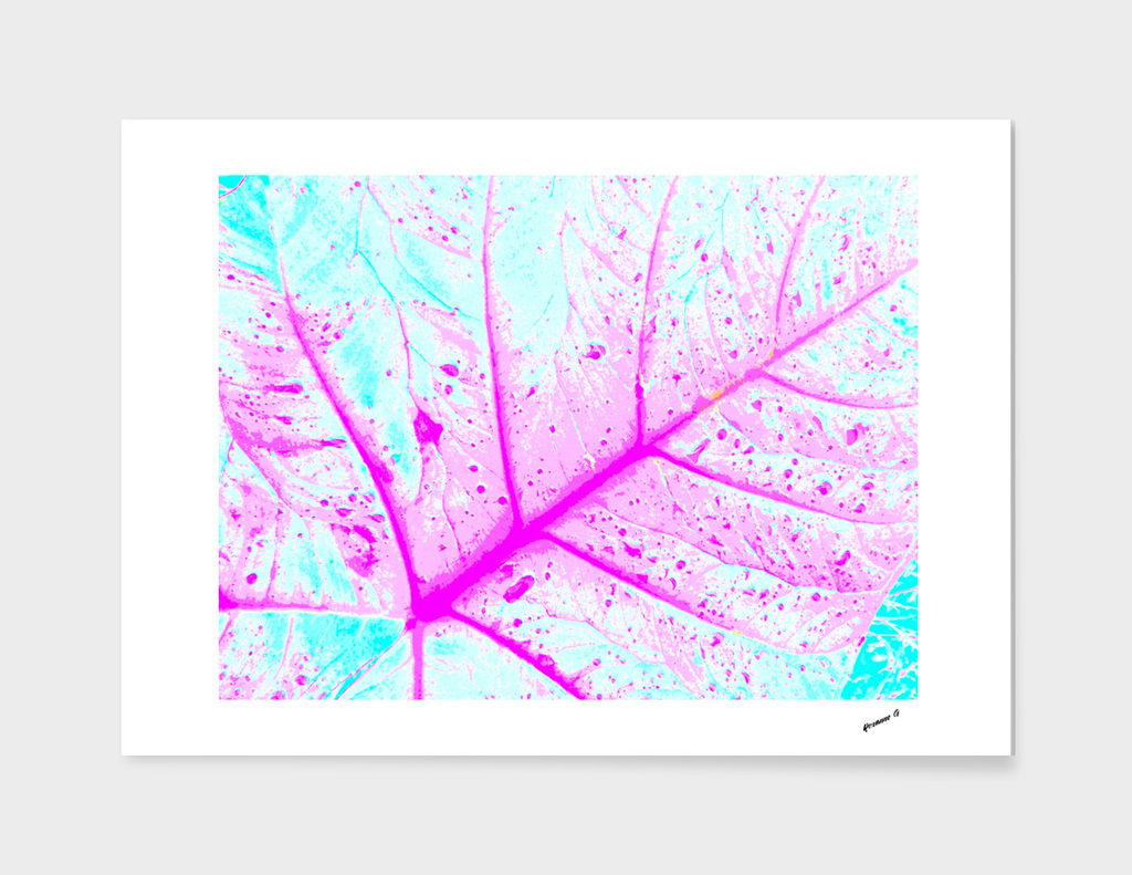 Abstract Alocasia Leaf
