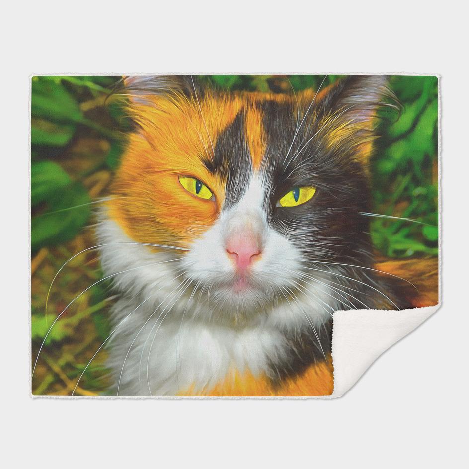 Yellow-white-black cat