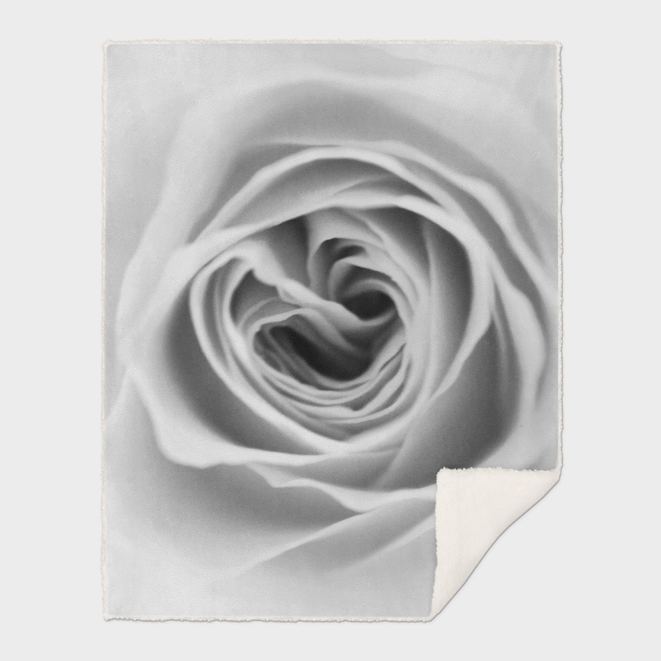 Rose v.01