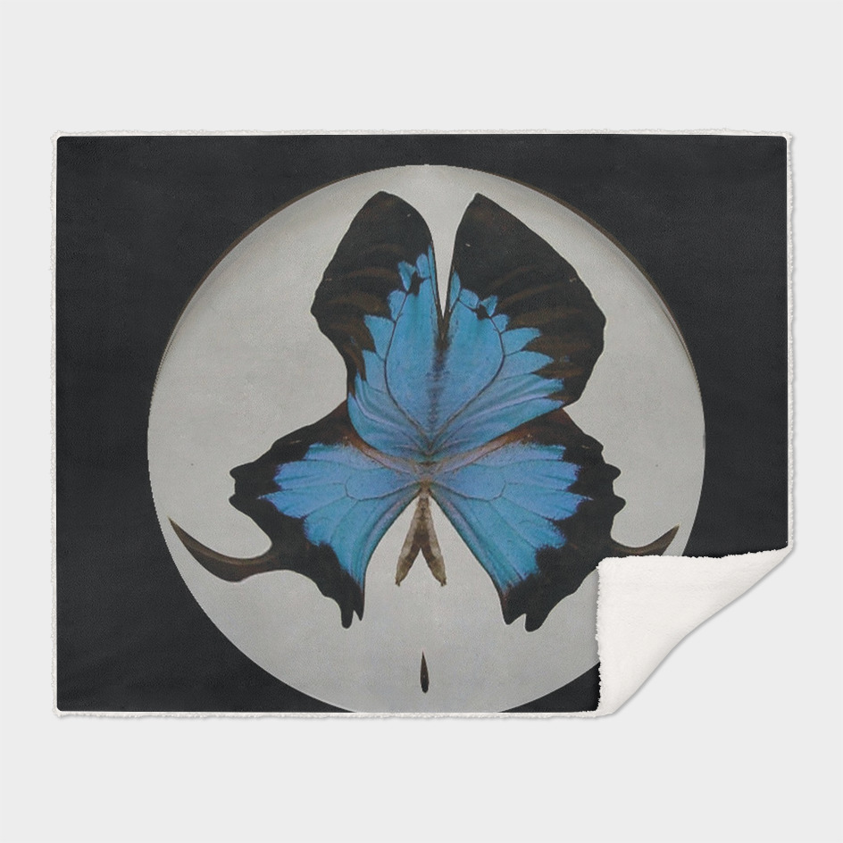 BUTTERLY CIRCLE 2
