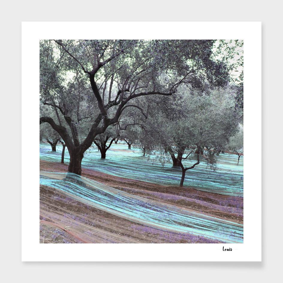 Fishing-Olives-vintro-2