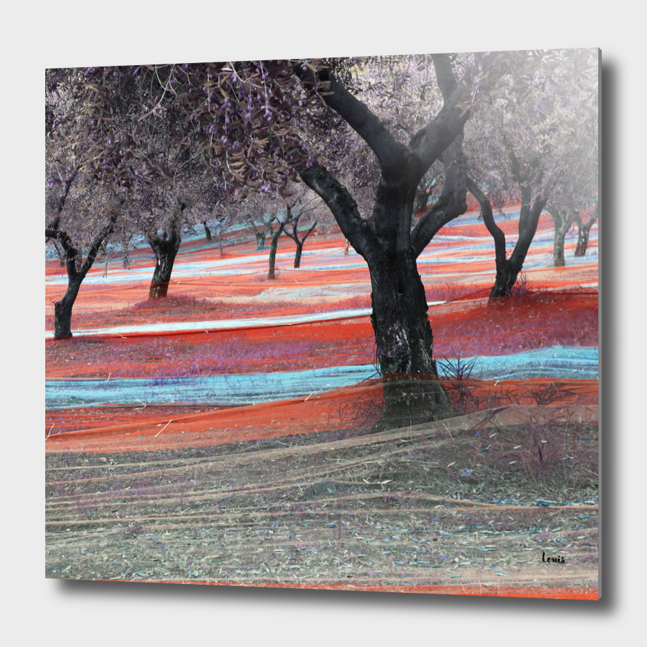 Fishing-Olives-autuno-2