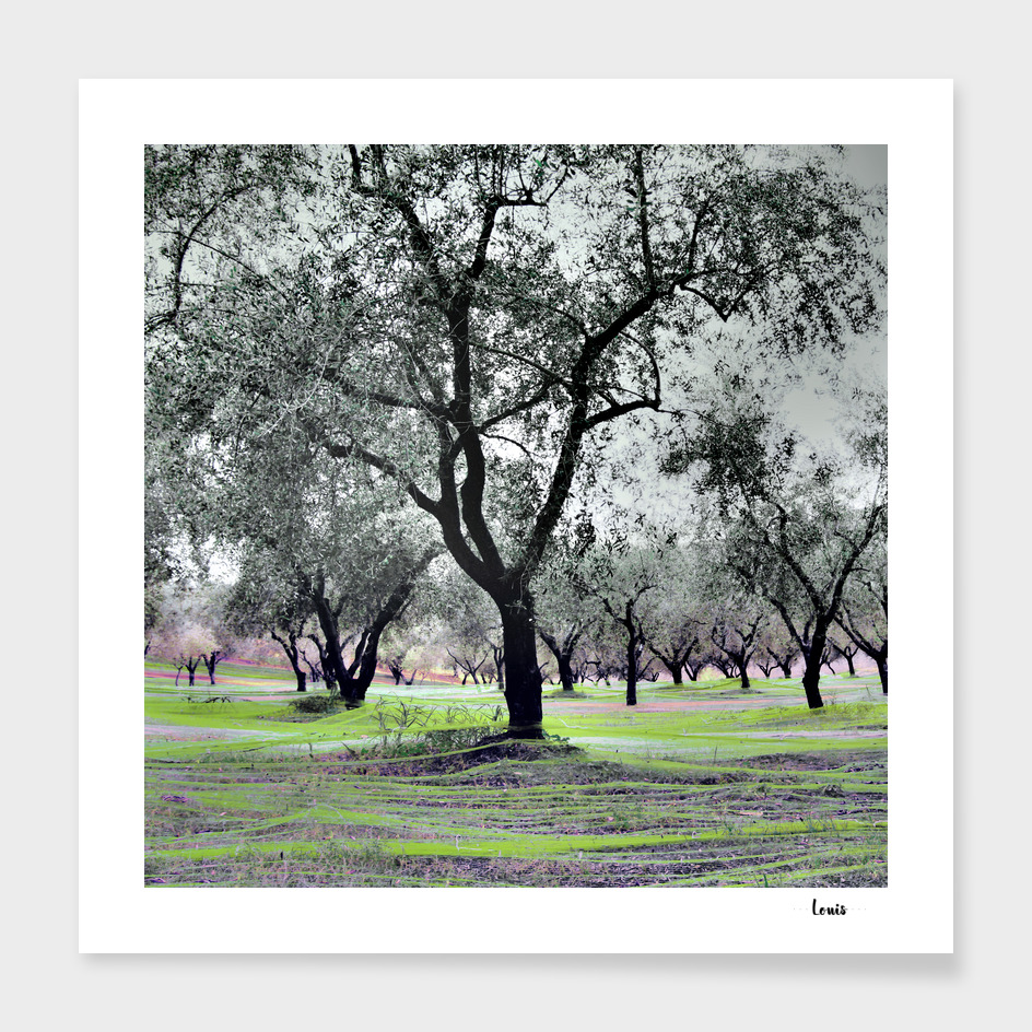 Fishing-Olives-verda-2