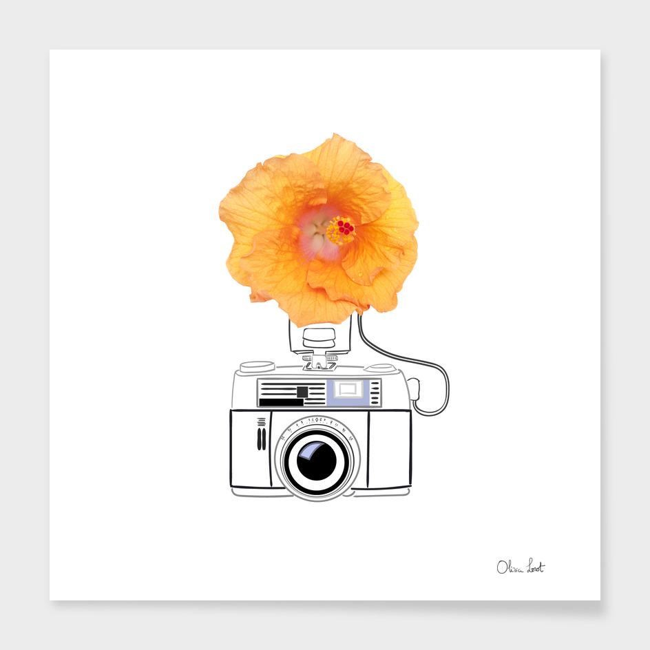 Hibiscus flash