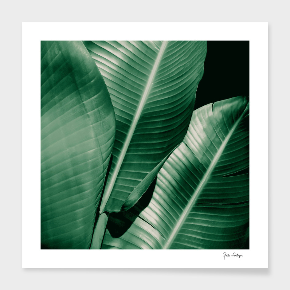Banana leaf allure
