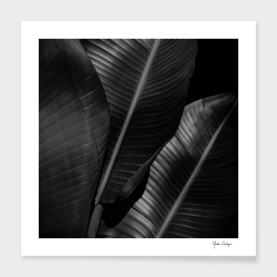 Banana leaf allure - night